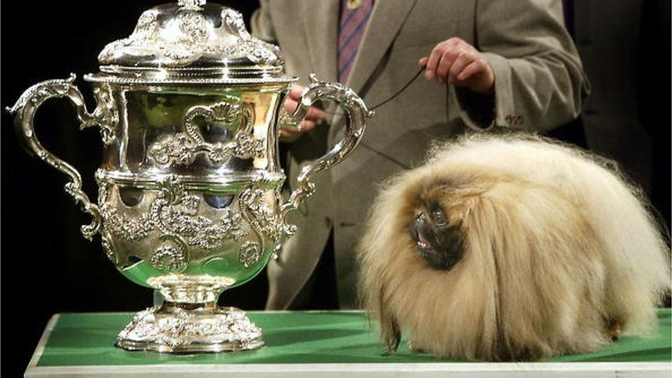 Pekingese dog Ch Yakee A Dangerous Liason 'Best In Show' at Crufts dog show in 2003