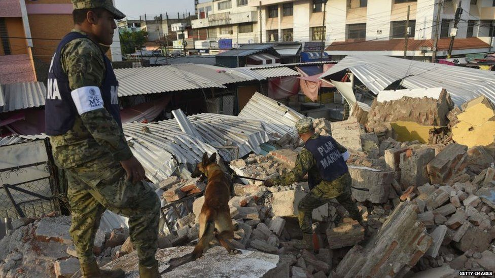 A sniffer dog searches a collapsed building