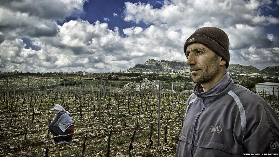 Making wine in a war zone: Syria's 'dream' vineyard
