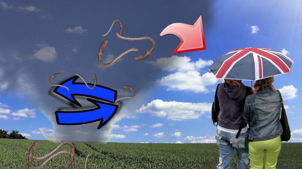 How earthworm rain happens
