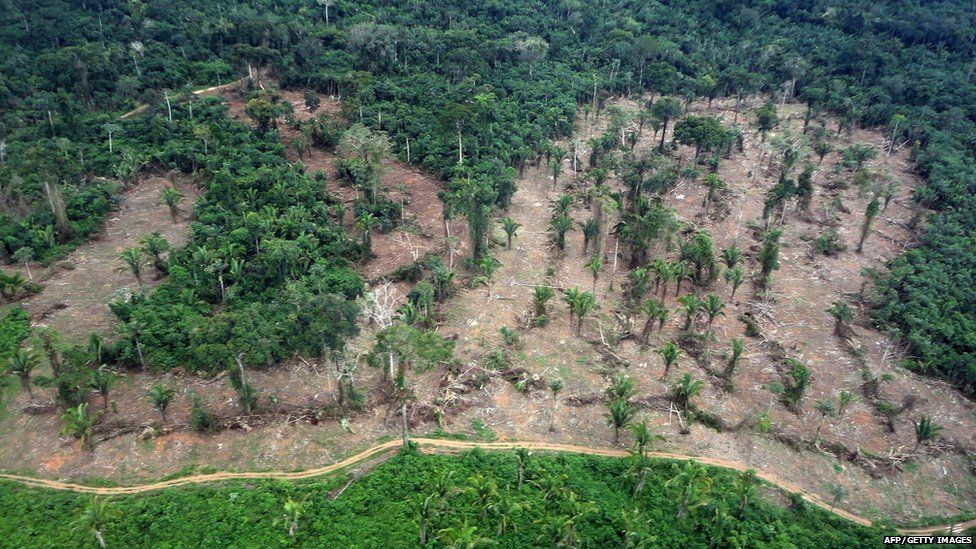 Rainforest that has been chopped down