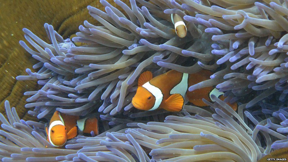 Fish swimming in coral