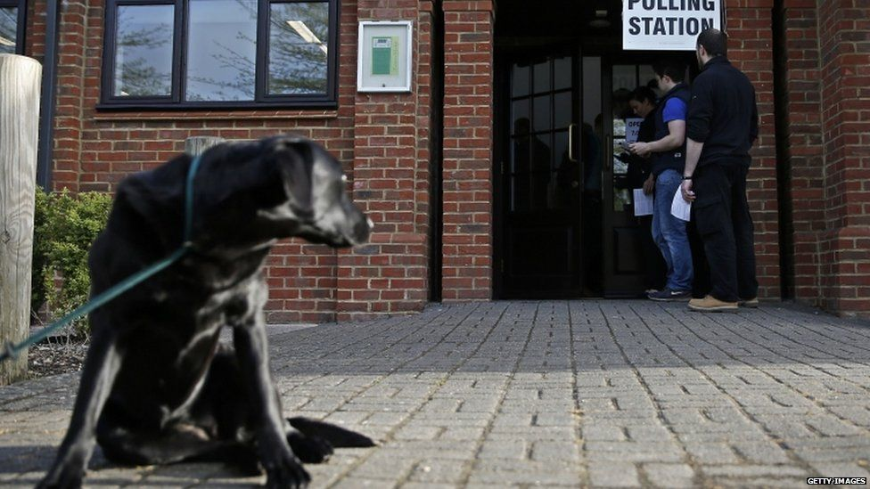 Dogs waiting sadly outside polling stations could be ...