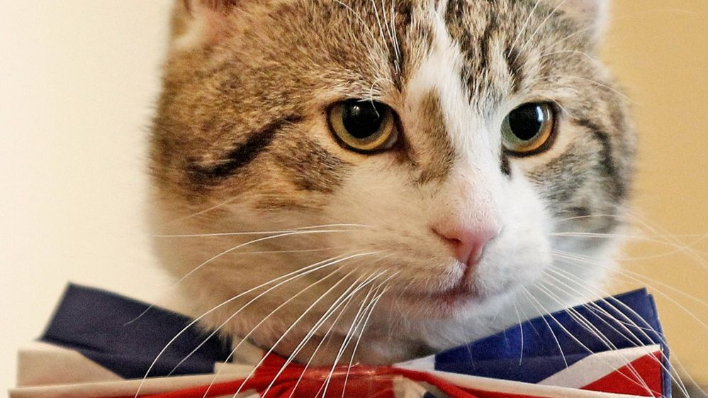 Larry the cat is Downing Street's chief mouser.