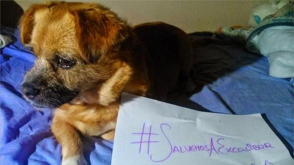 """Dog with sign reading """"Let's save Excalibur"""" in Spanish"""