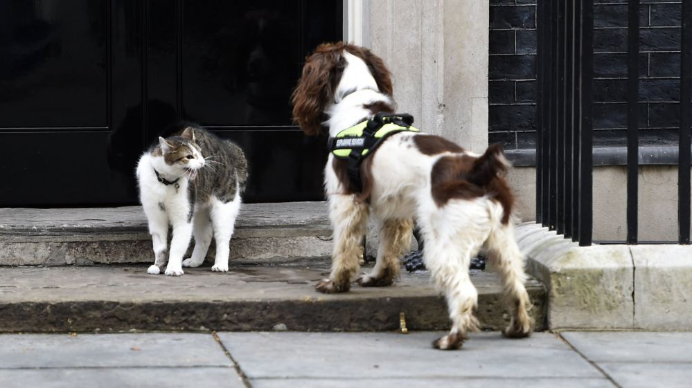 Downing Street cat Larry and police sniffer dog Bailey