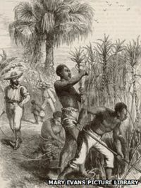 A drawing of black slaves harvesting sugar cane, watched over by a white man holding a whip