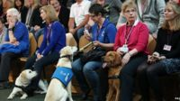 Guide dogs, trainee, in the Holyrood public gallery