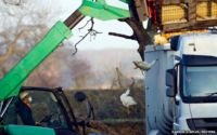 Department For Environment Food and Rural Affairs (Defra) officials move crates of ducks during a cull at a farm in Nafferton