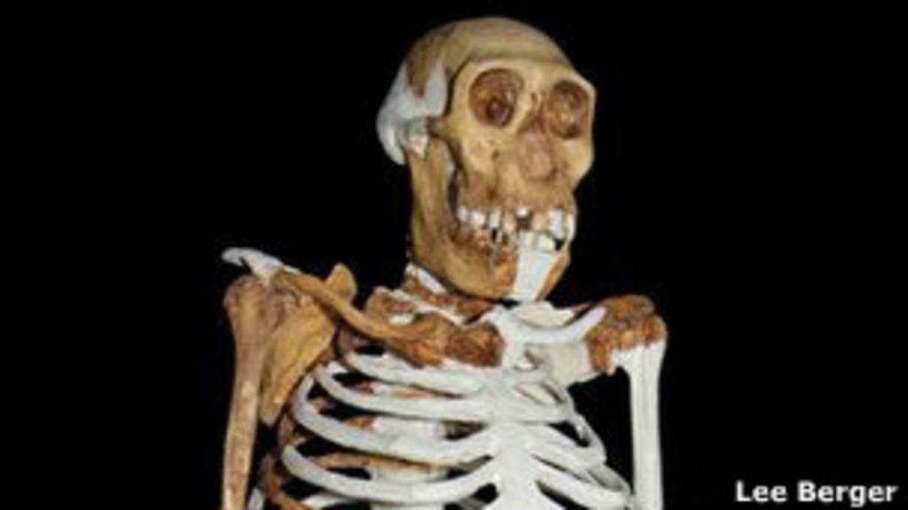 Esqueleto de 2 milhões de anos mistura traços de homem e primata ...