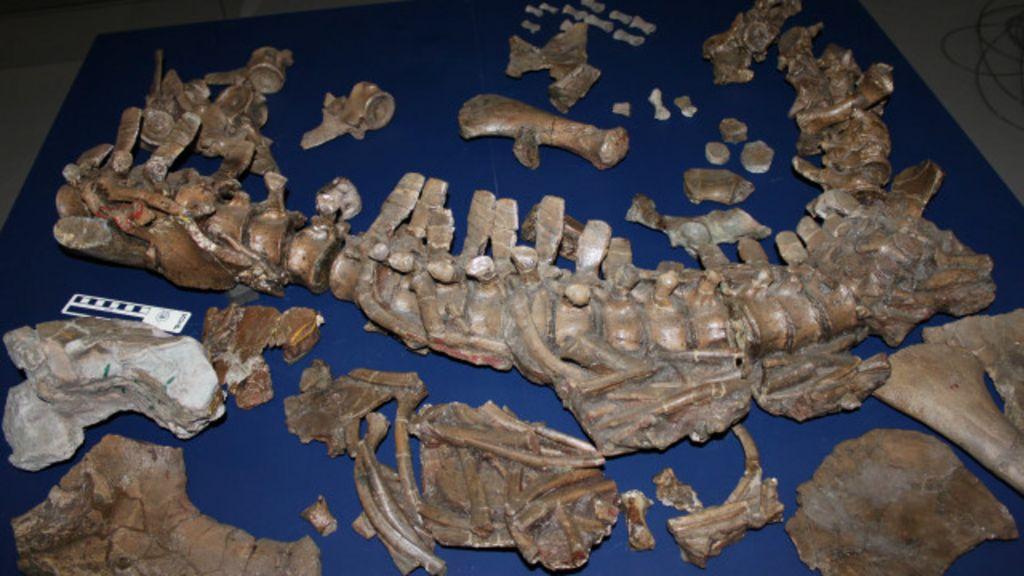 Ossada de 'monstro' pré-histórico é achada em gaveta de museu ...