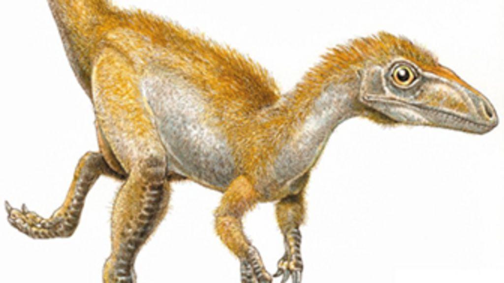 Exposição revela mistério das cores dos dinossauros - BBC Brasil