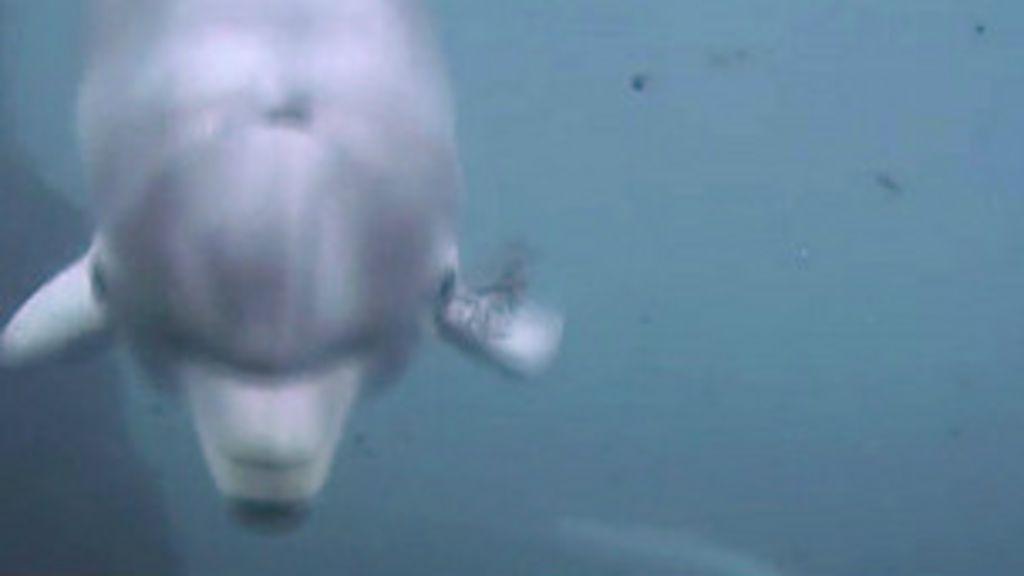 Golfinhos chamam uns aos outros pelo nome, sugere pesquisa ...