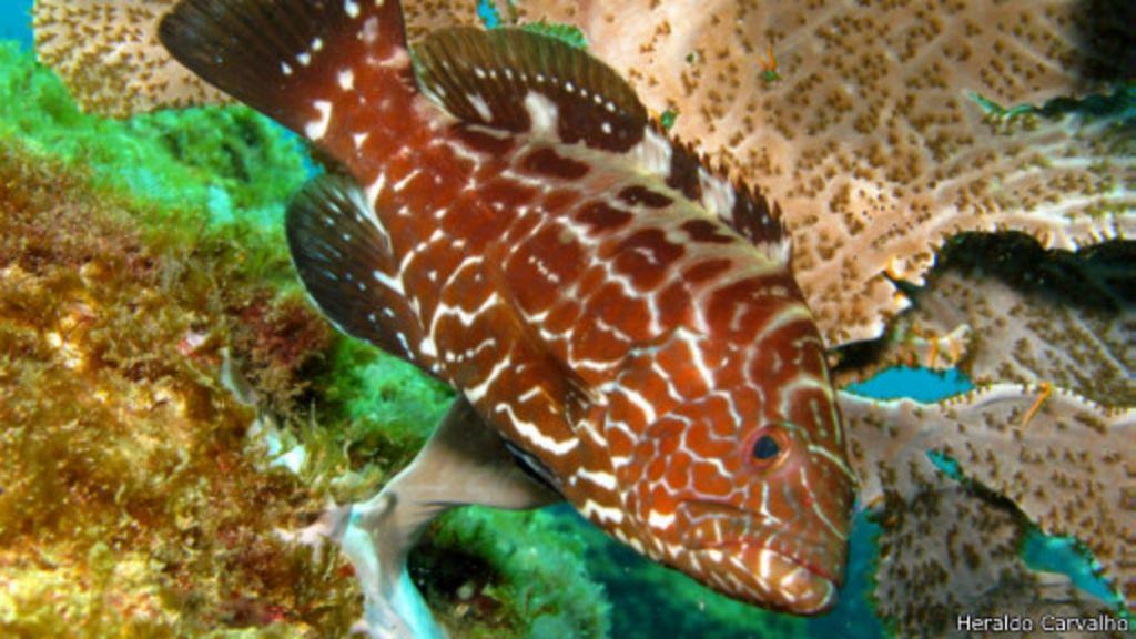 Estudo revela declínio de sete espécies de peixe no sul da Bahia ...