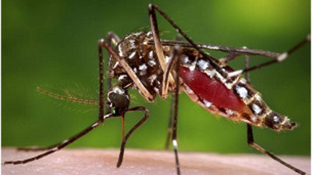 Especialistas temem surto de dengue no Nordeste durante a Copa ...