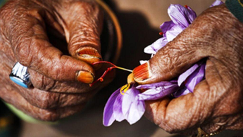 Fotógrafo retrata plantio de 'tempero mais caro do mundo' na ...