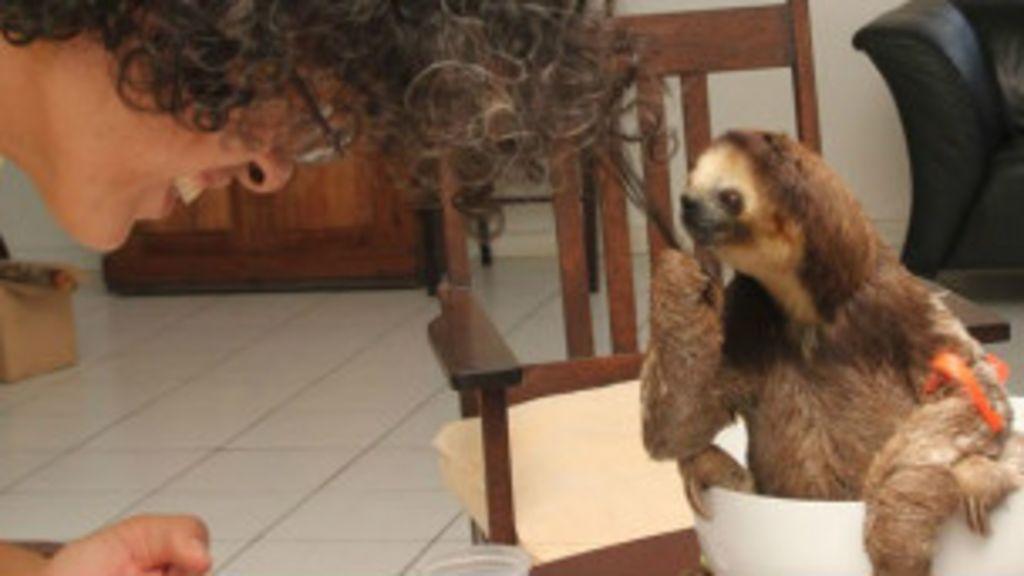 Mulher perde cão mas ganha 200 bichos-preguiça - BBC Brasil