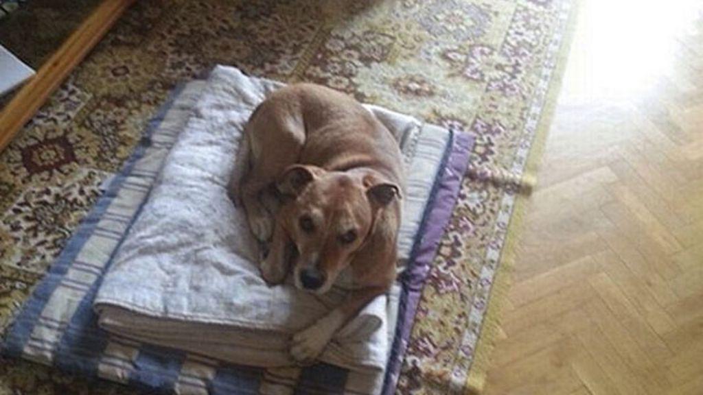 Sacrifício de cão de enfermeira infectada com ebola gera protesto e ...