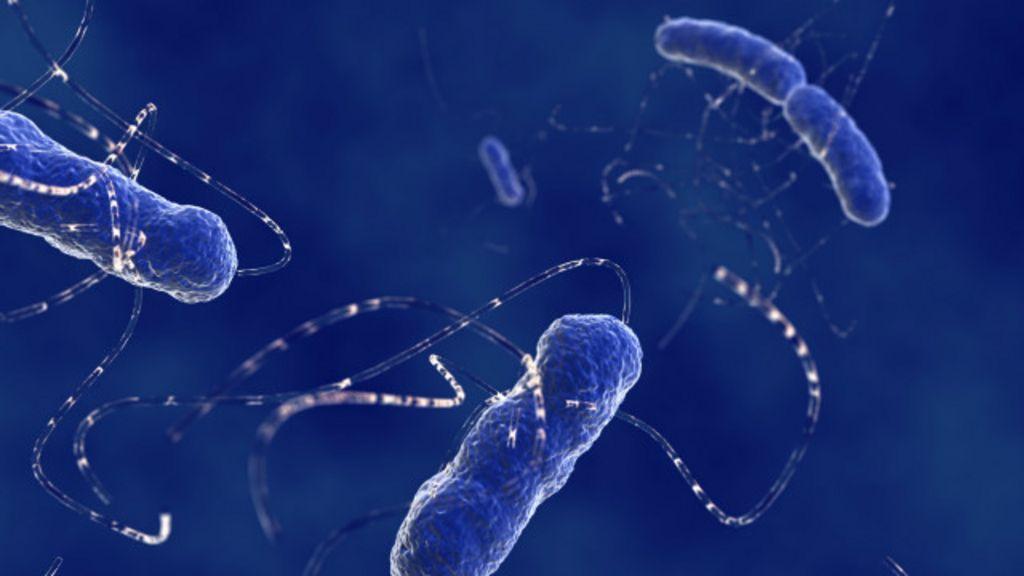 Em 35 anos, 'superbactérias' poderão matar mais que câncer - BBC ...
