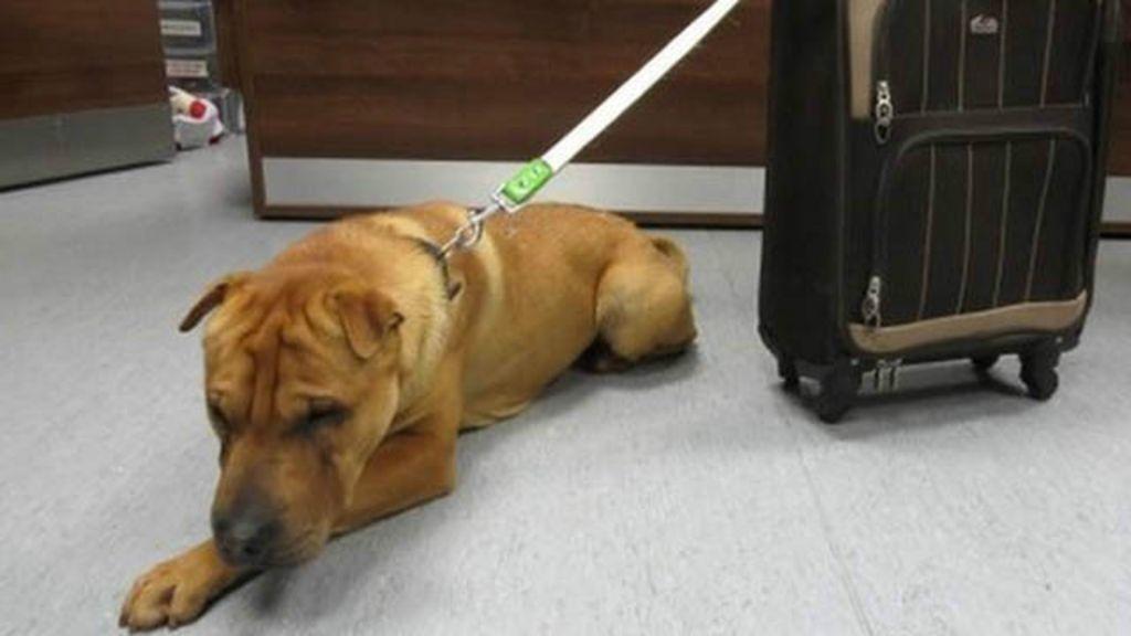 Cão é abandonado em estação de trem com pertences em mala ...
