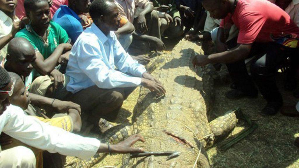 Pescador derrota crocodilo que engoliu sua mulher grávida - BBC ...