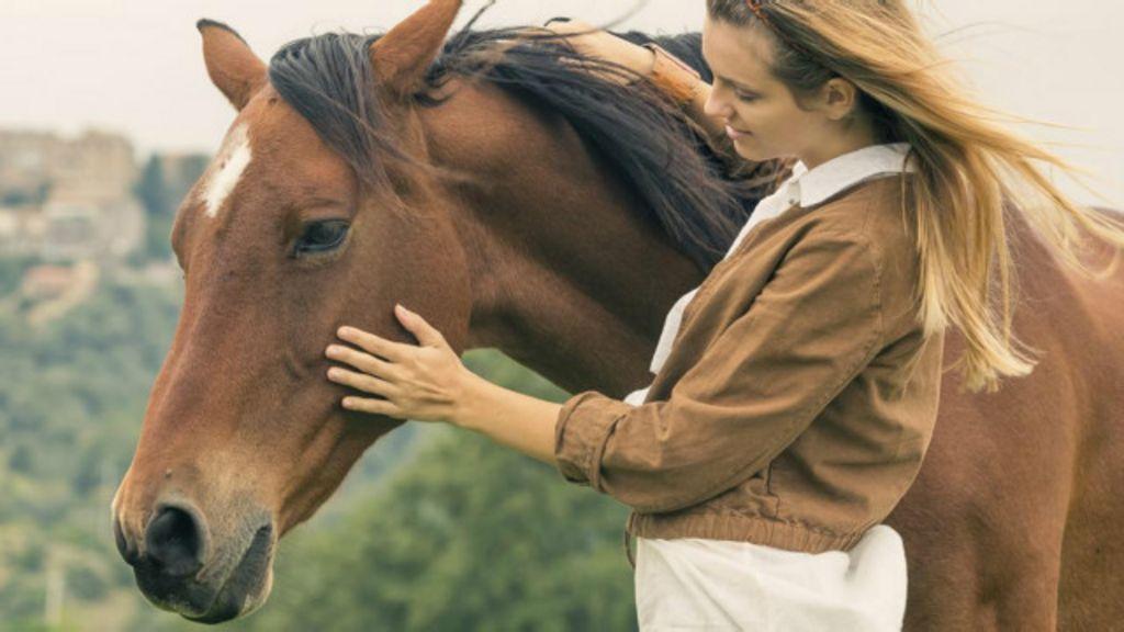 A impressionante memória dos cavalos - BBC Brasil