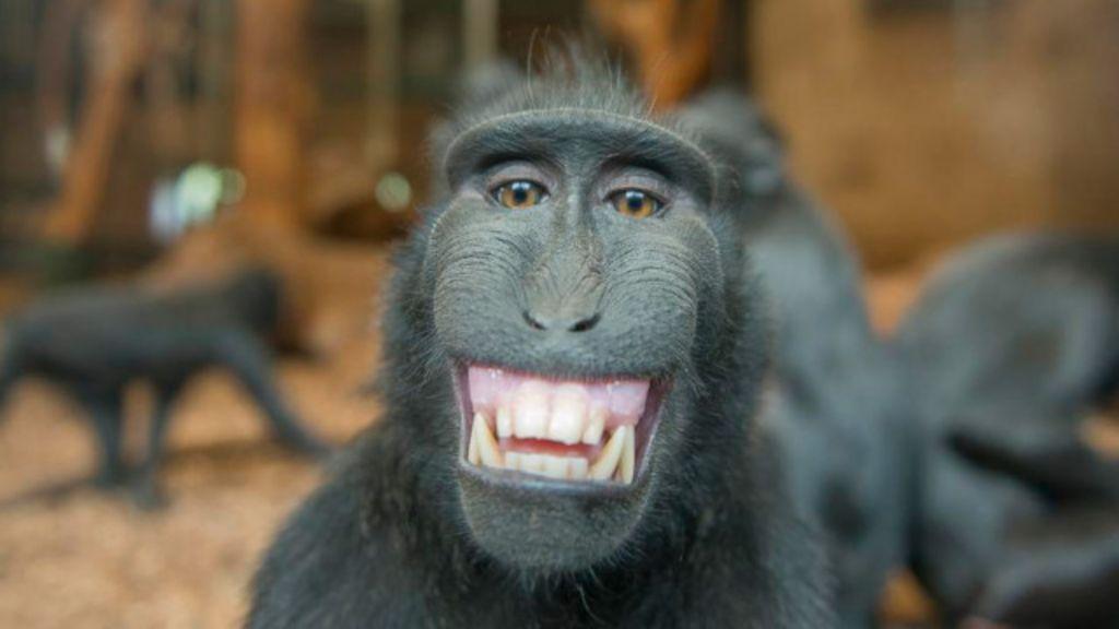 Em imagens: As 10 caras mais engraçadas que os bichos fazem ...