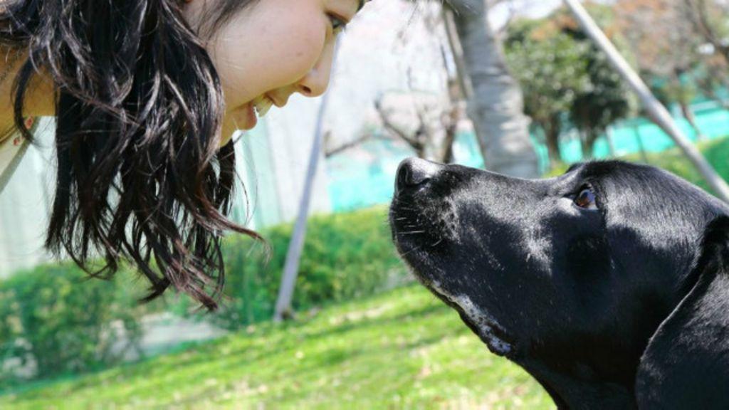 Por que nos apegamos aos cães? - BBC Brasil