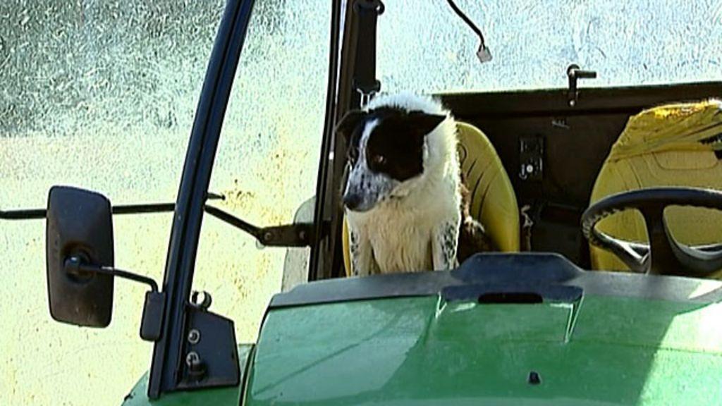 Cachorro 'conduzindo trator' causa congestionamento na Escócia ...