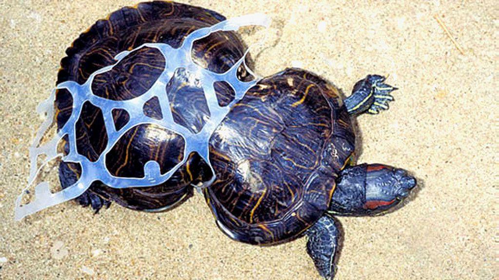 A triste história da tartaruga deformada pela poluição - BBC Brasil