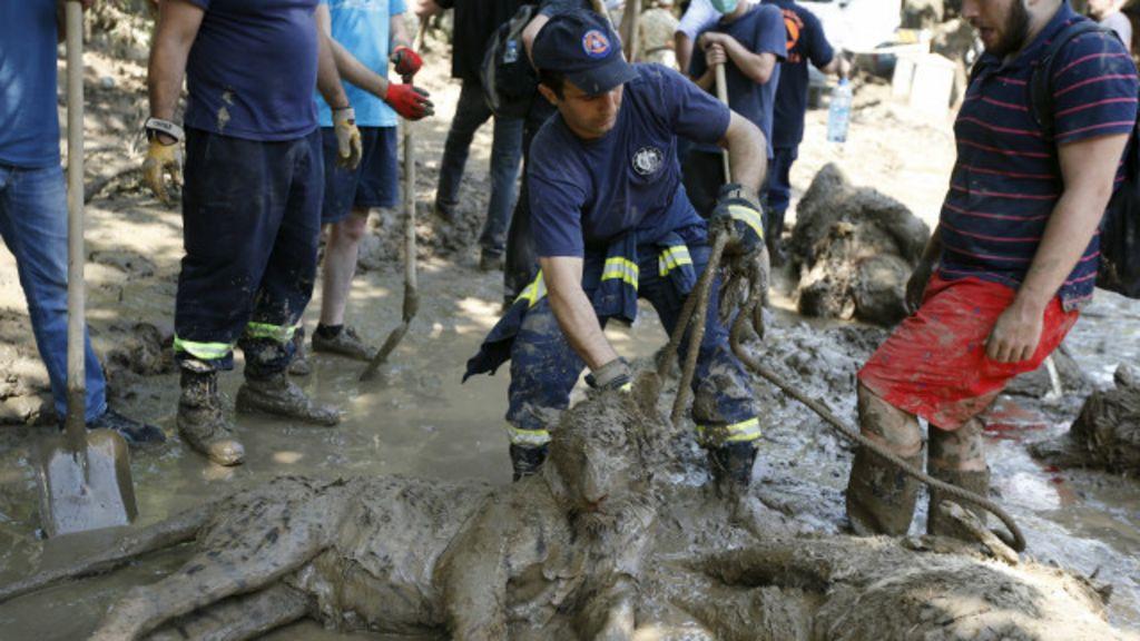 Homem é morto por tigre que escapou de zoo após enchente na ...