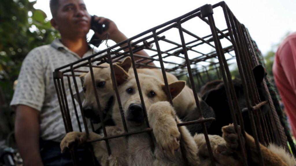 Yulin: o polêmico festival chinês em que se comem 10 mil cachorros ...