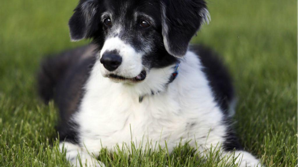 Cães evitam pessoas que tratam mal seus donos, diz estudo - BBC ...