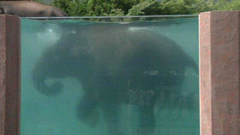 Zoo no Japão constrói piscina transparente para elefantes - BBC ...