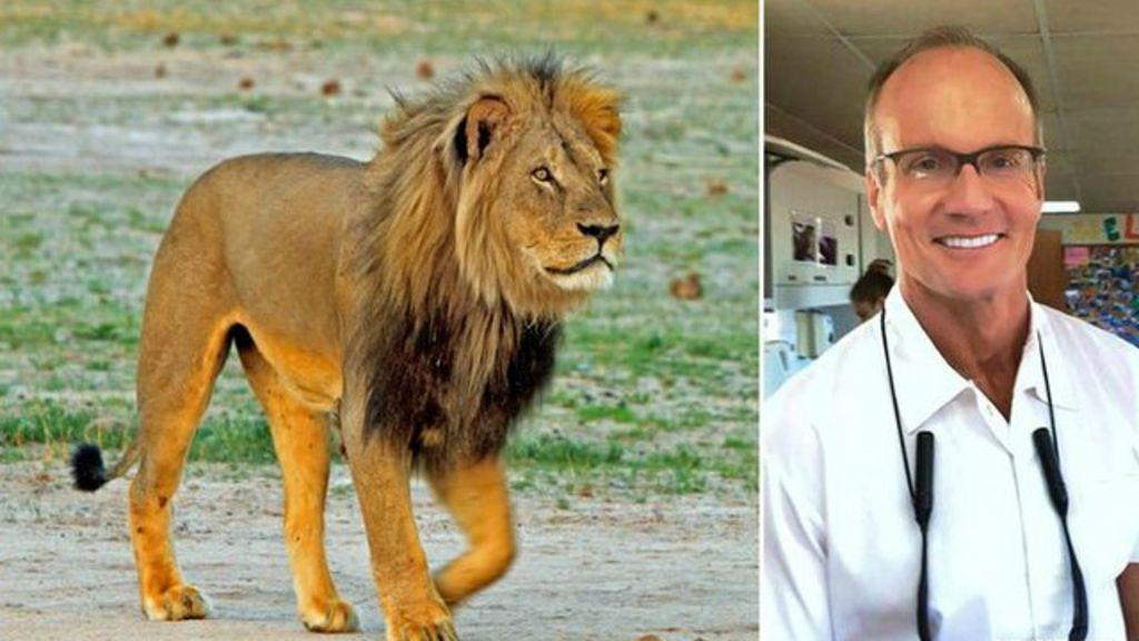 Dentista que matou leão no Zimbábue é alvo de ira nas redes sociais