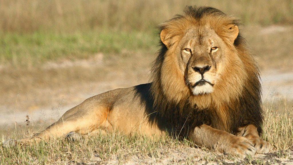 Zimbábue procura outro americano suspeito de matar leão - BBC ...