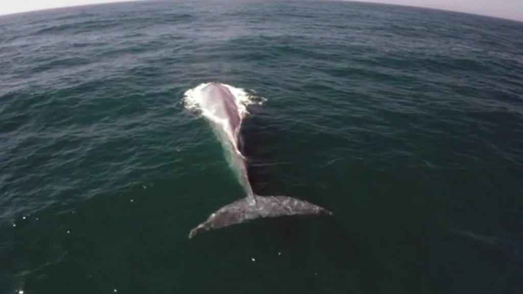 Apresentador é surpreendido por baleia azul durante filmagem de ...