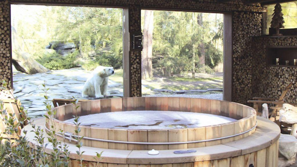 Zoo francês oferece suítes de luxo para 'acordar' com tigres, ursos e ...