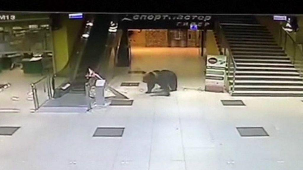 Urso é abatido após invadir shopping center na Rússia - BBC Brasil