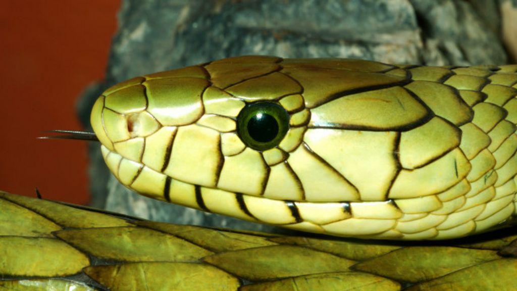 Por que bebês não têm medo de cobras? - BBC Brasil