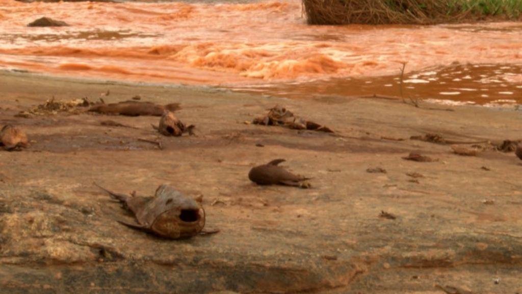 Conheça o Rio Doce antes e depois da enxurrada de lama - BBC ...