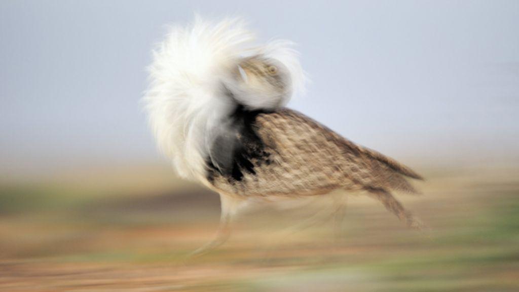 Animais em ação: Confira fotos premiadas em concurso de vida ...