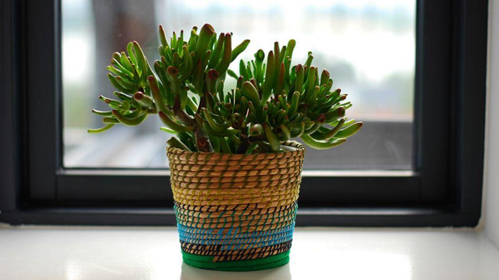 5 plantas que la nasa recomienda para purificar el aire de for Flores para interiores con poca luz