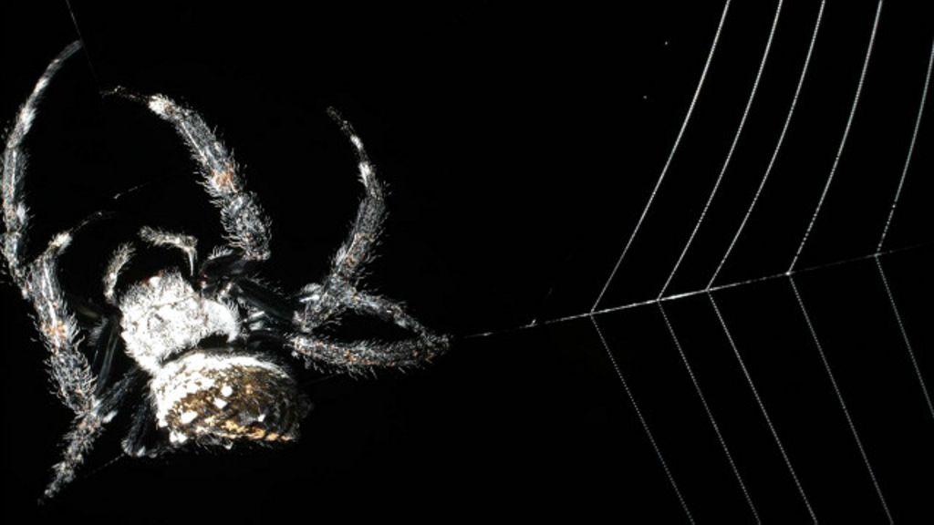 A pequena aranha que constrói a maior e mais forte teia do mundo ...