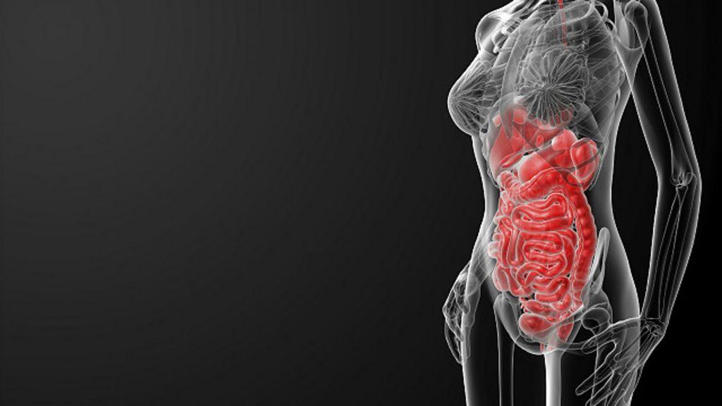 Sem quais partes do corpo é possível sobreviver? - BBC Brasil