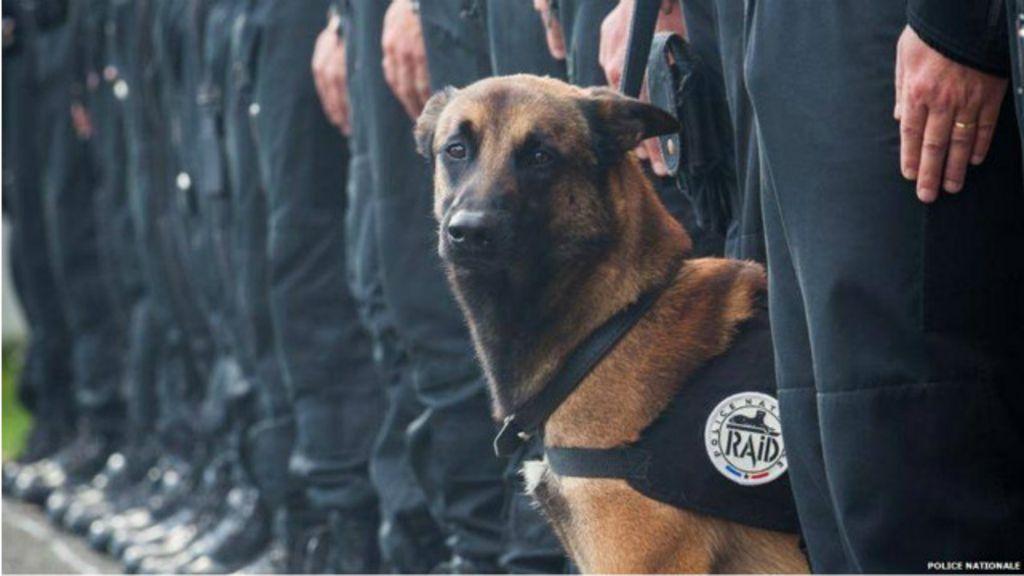 Cadela policial morta em ataques a Paris ganha medalha de bravura
