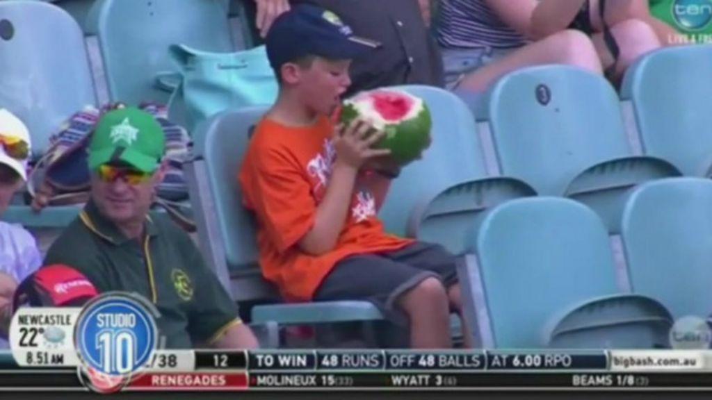 'Garoto melancia' vira hit entre fãs de críquete na Austrália - BBC ...