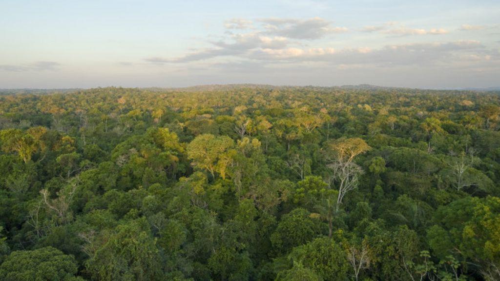 Estudo alerta para emissões de novas hidrelétricas na Amazônia ...