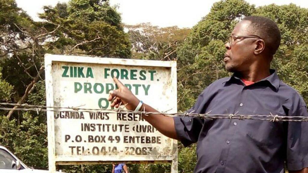 Na floresta de Zika, cientistas temem transmissão para humanos ...