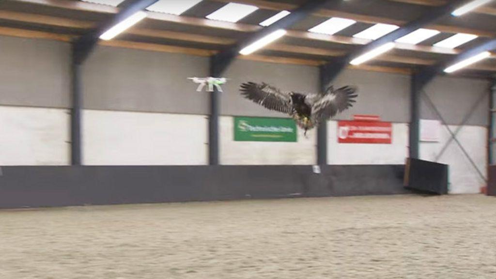 Polícia holandesa treina águias para capturar drones em pleno voo ...